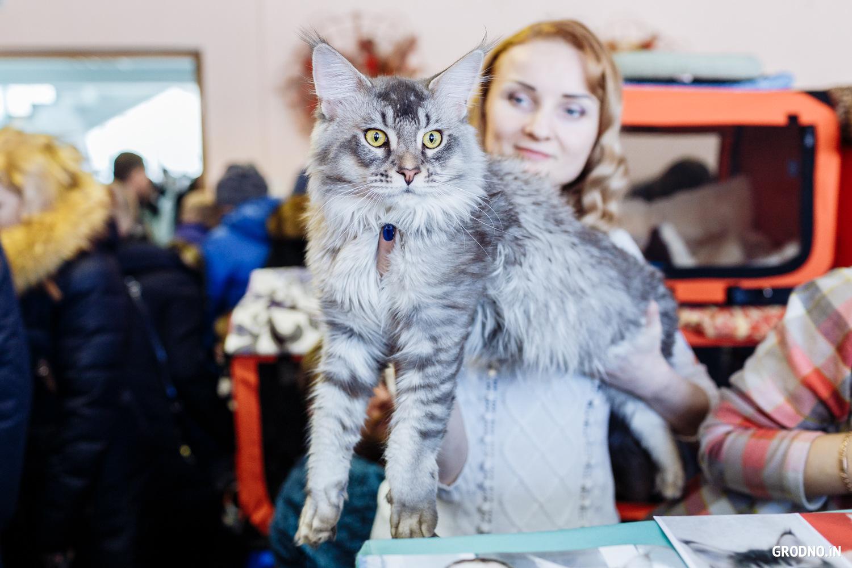 возможности данных отправить фото кошки на конкурс в екатеринбурге иркутской области установили