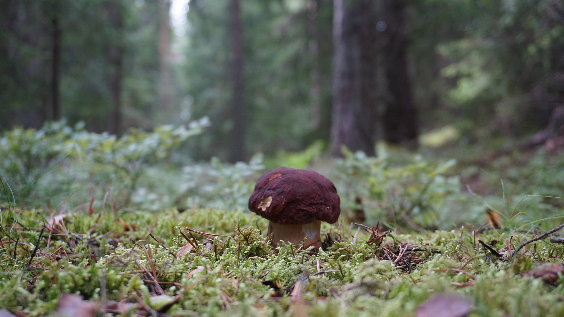 разделка грибы в ельнике фото худела низкоуглеводной кетодиете